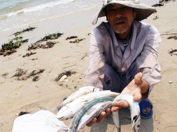 Suy diễn nguyên nhân cá chết chỉ làm tăng thiệt hại cho ngư dân ảnh 1