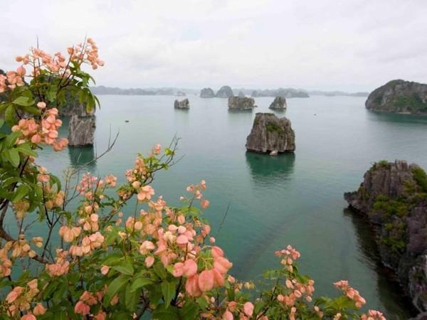 Hang Cỏ (hang Thiên Cảnh Sơn) là một điểm tham quan hấp dẫn trên vịnh Bái Tử Long