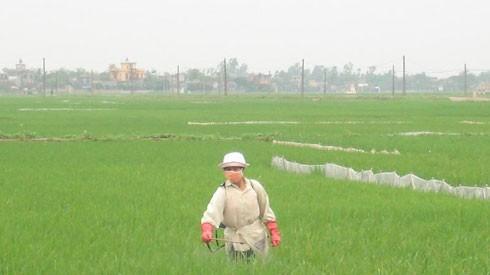 Nông nghiệp lạm dụng thuốc trừ sâu, hóa chất chăn nuôi đang đối mặt hậu quả