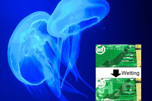 Mã hóa thông tin mật bằng da sứa