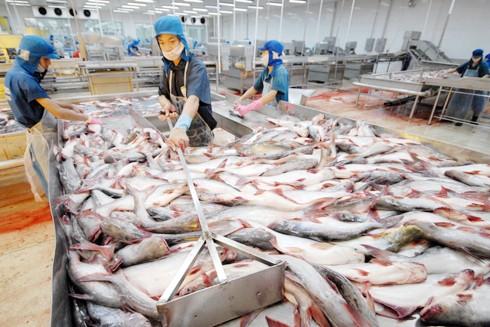 Thêm 2 doanh nghiệp được phép xuất khẩu cá tra vào Hoa Kỳ