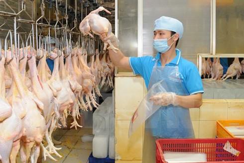 Đóng gói sản phẩm thịt gà cung cấp ra thị trường