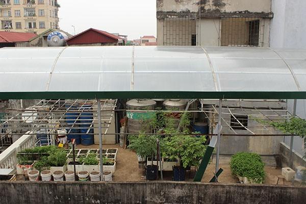 Mô hình trồng rau sạch được sắp xếp khoa học, hợp lý của gia đình ông Hải