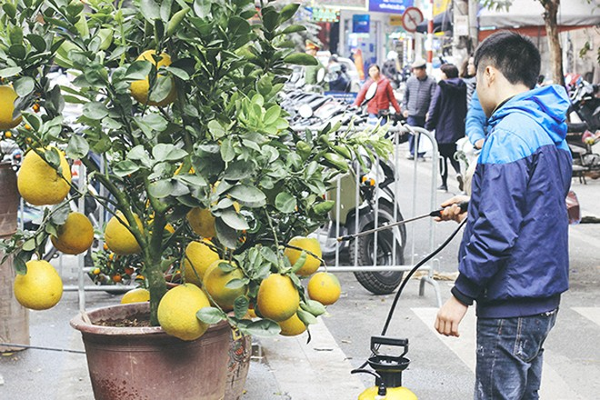 Một vòng chợ hoa Hàng Lược trước thềm Tết Đinh Dậu ảnh 5
