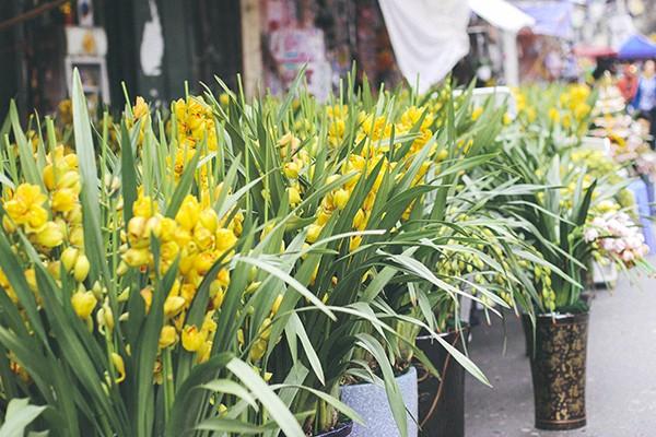 Một vòng chợ hoa Hàng Lược trước thềm Tết Đinh Dậu ảnh 2