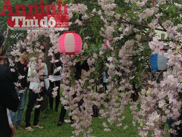 Thú vị với lễ hội hoa anh đào Nhật Bản 2015 ảnh 6