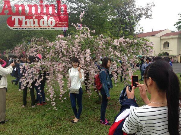 Thú vị với lễ hội hoa anh đào Nhật Bản 2015 ảnh 9