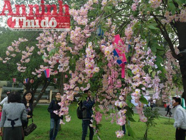 Thú vị với lễ hội hoa anh đào Nhật Bản 2015 ảnh 5