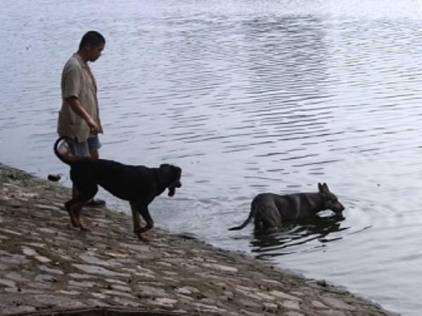 Hãi hùng vì chó dữ tung tăng khắp các công viên, vườn hoa Hà Nội ảnh 2