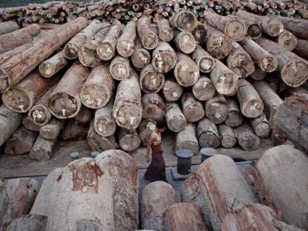 153 lâm tặc Trung Quốc bị Myanmar phạt tù nặng ảnh 1