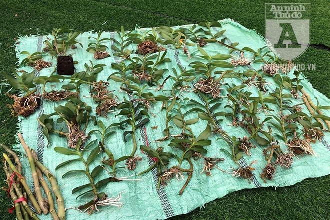 Phải mất 2 năm để khôi phục lại những cây lan bị kẻ gian cắt trộm