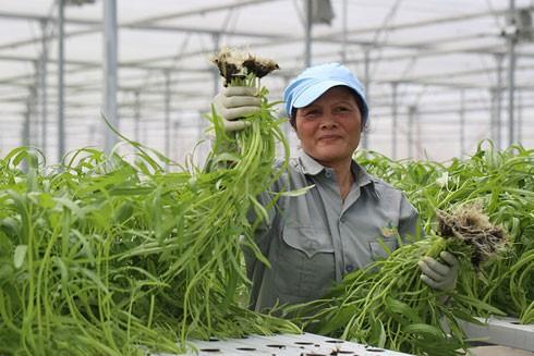 """Cái """"bắt tay liên kết giữa Vingroup với 1.000 hợp tác xã và hộ nông dân sẽ nhằm tạo nguồn thực phẩm sạch, an toàn cho xã hội"""