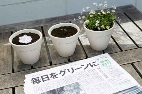 Cây xanh mọc lên từ giấy báo tại Nhật Bản ảnh 2