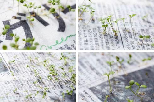 Cây xanh mọc lên từ giấy báo tại Nhật Bản ảnh 3