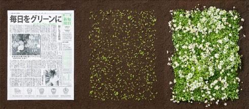 Giấy báo này là một loại hỗn hợp của giấy tái chế, nước và hạt giống hoa cỏ