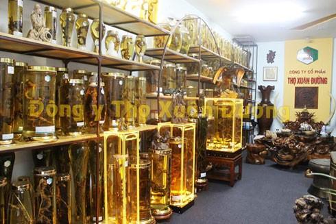 Hiện nhà thuốc Thọ Xuân Đường đang sở hữu nhiều cây thuốc, vị thuốc quý, trong đó có củ Sâm Ngọc Linh trên 100 năm tuổi