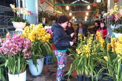 Giá hoa lan ngày cận tết không bị tăng giá nhiều, nên nhiều người tìm đến mua