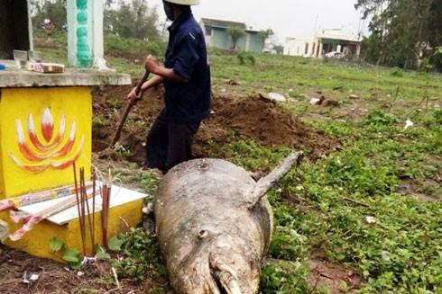Người dân địa phương đã tổ chức mai táng cho con cá này