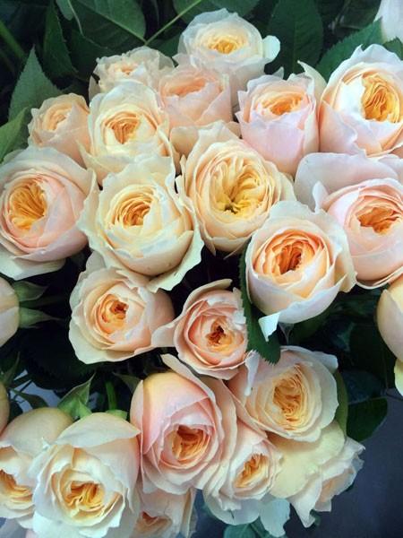 Juliet loại hoa đặc biệt được nhà tạo giống hoa nổi tiếng David Austin mất 15 năm nghiên cứu tạo ra được 38 Degree Flowers nhập về mùa Valentine 2015 Hồng 7 màu với ý nghĩa tượng trưng cho những điều đặc biệt, kỳ diệu trong cuộc sống cũng được nhiều bạn trẻ yêu thích