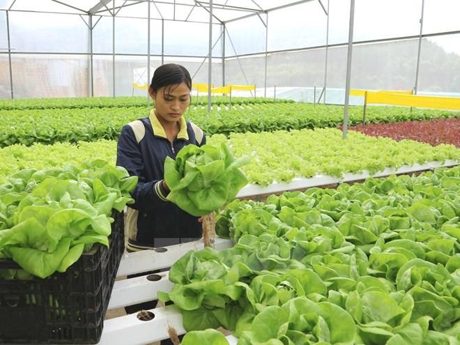 Hàn Quốc sẽ tuyển chọn người nước ngoài hoạt động trong lĩnh vực nông ngư nghiệp làm việc thời vụ