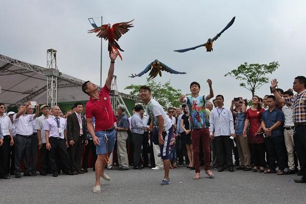 Khách tham quan thích thú chơi đùa với vẹt Nam Mỹ tại Festival sinh vật cảnh