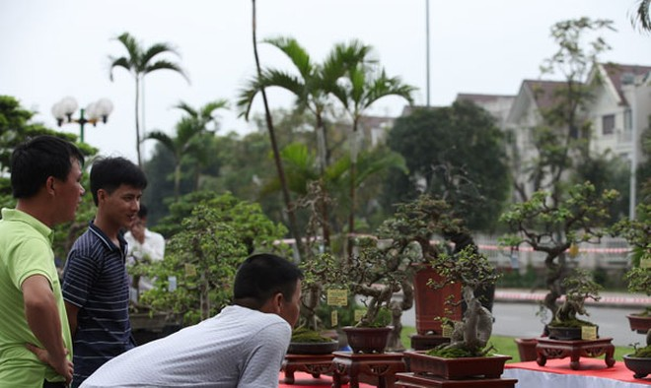 Lễ hội sinh vật cảnh lớn nhất Việt Nam tại Vinhomes Riverside ảnh 4