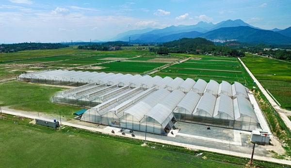Theo kế hoạch, từ nay đến cuối năm 2016, Công ty VinEco sẽ hoàn thiện lắp đặt 55ha nhà kính và khoảng 120ha nhà lưới/nhà màng để canh tác các loại rau mầm, rau thủy canh và các loại rau quả khác trên toàn quốc. Nhờ đó, hệ thống nhà kính rau mầm, rau thủy canh của VinEco không chỉ đáp ứng tốt nhu cầu rau sạch trong nước mà còn hướng tới mang thương hiệu nông sản sạch Việt gia nhập thị trường quốc tế.