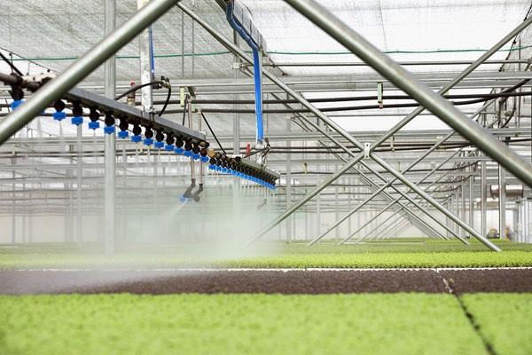 """""""Nhà máy hiện đại"""" này chính là nhà kính, nơi từng hạt mầm được chăm sóc bằng hệ thống tưới tự động và phun sương để giữ ẩm, điều khiển khí hậu... Cây trồng được sinh trưởng trong môi trường hoàn toàn lý tưởng, hoàn toàn không phụ thuộc vào thời tiết nên cho năng suất cao, ổn định và chất lượng đồng đều."""