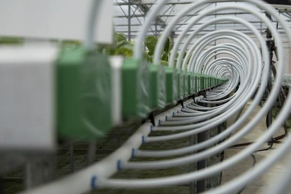 Rau được nuôi dưỡng bằng đường ống thủy canh động vừa cung cấp dinh dưỡng cho rau vừa đảm bảo không ứ đọng nước trong rễ. Với cơ chế tuần hoàn, dinh dưỡng sau khi chay từ đầu đến cuối đường ống sẽ được thu về bể chứa, để kiểm tra thành phần dinh dưỡng, bổ sung thêm dưỡng chất rồi tiếp tục trở lại đường ống.