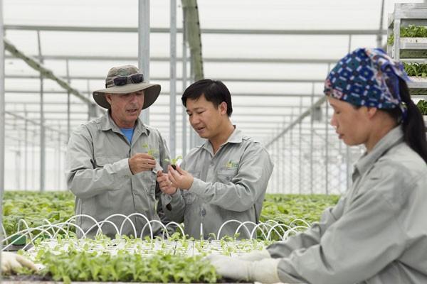 Với quy trình chuẩn, các sản phẩm rau thủy canh nhà kính được kiểm soát tuyệt đối về dinh dưỡng, không chỉ an toàn mà còn cho năng suất cao gấp nhiều lần so với rau trồng ngoài đồng ruộng