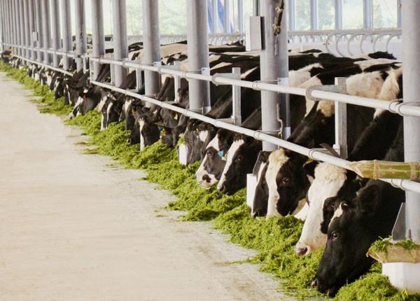 Đến nay, Vinamilk đã có 10 trang trại trải dài khắp Việt Nam có quy mô lớn với toàn bộ bò giống nhập khẩu từ Úc, Mỹ, và New Zealand