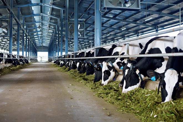 Vinamilk hiện đang có 10 trang trại trong đó có 7 trang trại theo chuẩn Global G.A.P trang bị công nghệ cao, khép kín từ đồng cỏ đến trang trại và 3 trang trại khác đang được công ty xây dựng