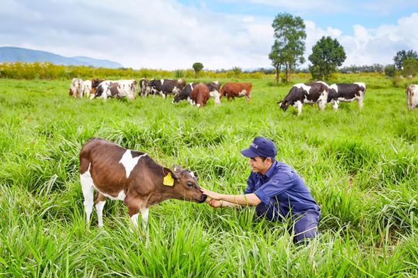 """""""Vinamilk rất tự hào là công ty sữa đầu tiên tại Việt Nam sản xuất được Sữa tươi Vinamilk 100% organic theo tiêu chuẩn organic Châu Âu. Đây là bước tiến tiếp theo của Vinamilk trên hành trình mang đến những sản phẩm organic cao cấp giàu dinh dưỡng từ thiên nhiên tốt cho sức khỏe. Giờ đây, người tiêu dùng Việt Nam có thể dễ dàng tiếp cận các sản phẩm organic đạt tiêu chuẩn organic Châu Âu được sản xuất ngay tại Việt Nam."""""""