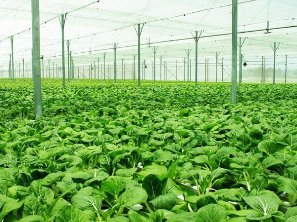 Doanh nghiệp là cầu nối nông dân với thị trường