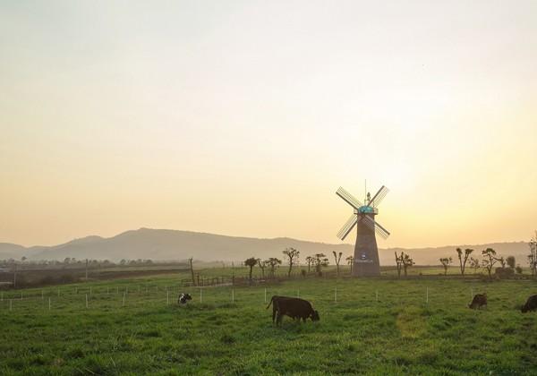 Những chiếc cối xay gió của trang trại tạo nên một khung cảnh đậm chất điện ảnh