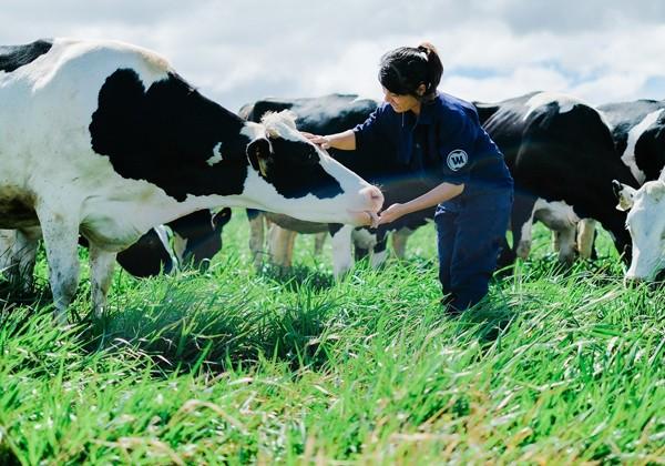 Các bé sẽ được vui chơi cũng các cô bò dễ thương trên đồng cỏ xanh rì