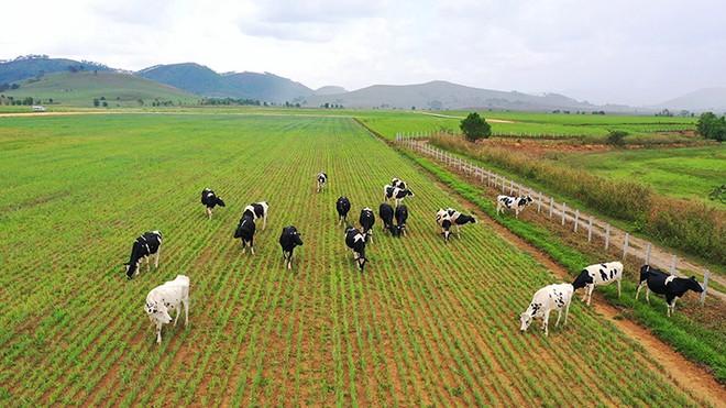 """Vinamilk tiếp tục ghi dấu trên bản đồ Organic thế giới với siêu dự án """"resort"""" bò sữa tại Lào."""