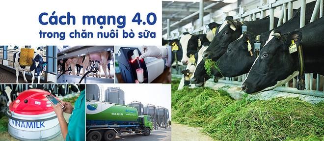 Cách mạng 4.0 trong chăn nuôi bò sữa giúp việc quản lý và vận hành trang trại tối ưu hóa được hiệu quả.