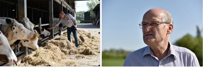 Diện tích mỗi nông trại của nông dân Cô gái Hà Lan bằng 140 sân vận động: họ đã làm điều đó như thế nào?