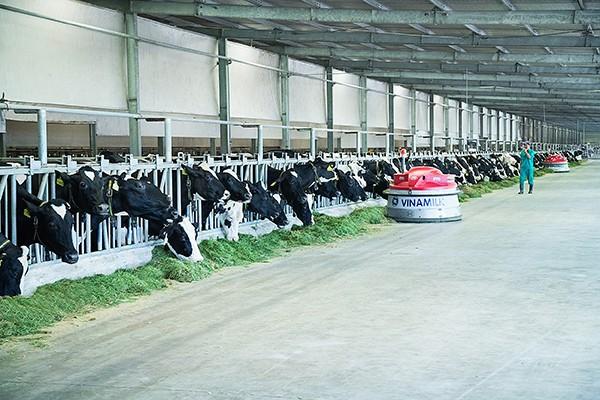 Các trang trại bò sữa đều được Vinamilk ứng dụng công nghệ cao trong chăn nuôi và quản lý