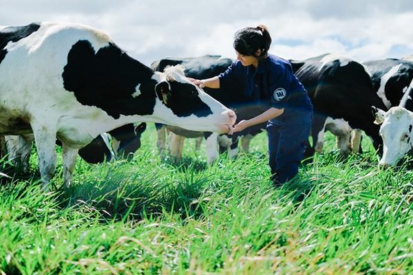 Trang trại bò sữa tiêu chuẩn organic châu Âu đầu tiên tại Việt Nam do tổ chức Control Union của Hà Lan chứng nhận