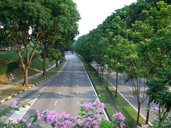 Singapore khiến cả thế giới ngưỡng mộ với hơn 50% đô thị được cây xanh bao phủ