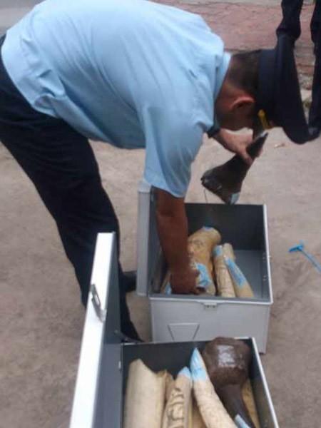Thu giữ 65,42kg ngà voi, sừng tê giác từ Pháp về Hà Nội ảnh 1