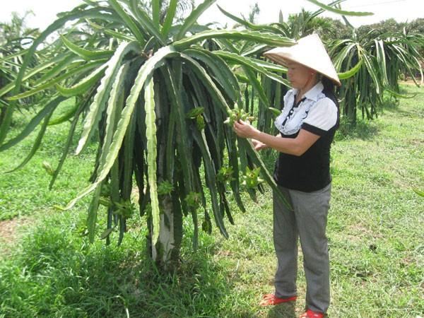Hà Nội dẫn đầu cả nước về xây dựng nông thôn mới ảnh 1