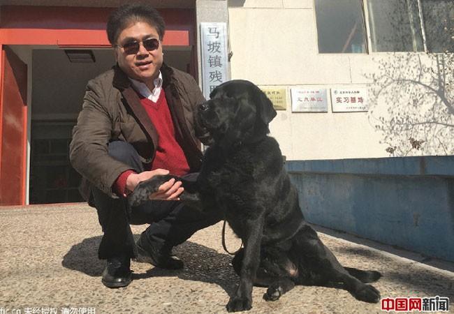 Trả lại chó cho chủ cũ kèm lời xin lỗi ảnh 1