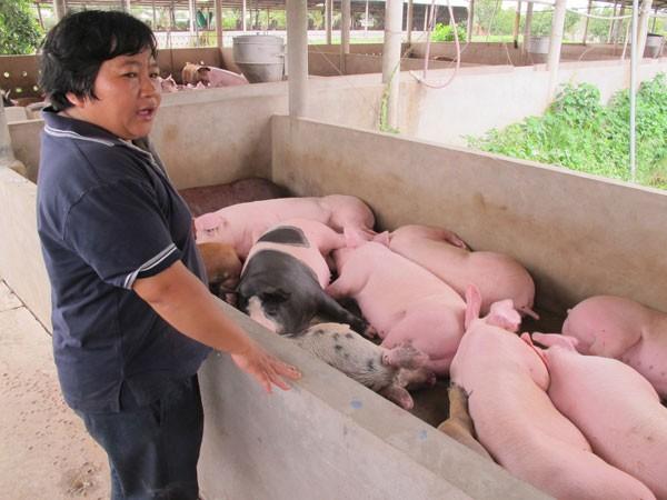 Giá lợn tại thị trường nội địa giảm mạnh do Trung Quốc dừng mua