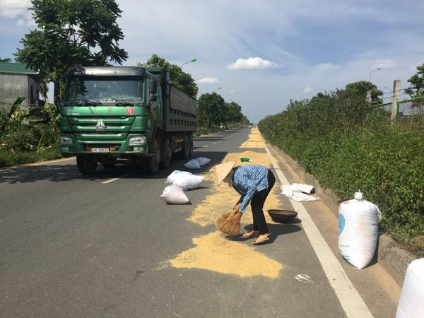 Nguy cơ xảy ra tai nạn từ việc phơi thóc lúa trên đại lộ Thăng Long là rất cao