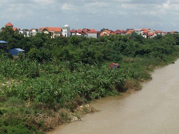 Một vườn chuối ở khu đất bãi thôn Võng La đã bị sụt lở xuống sông vì tàu hút cát