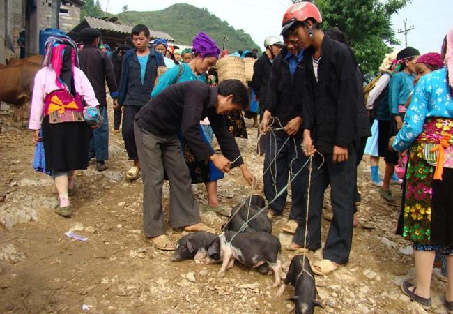 Chợ Lũng Phìn còn bán cả lợn cắp nách