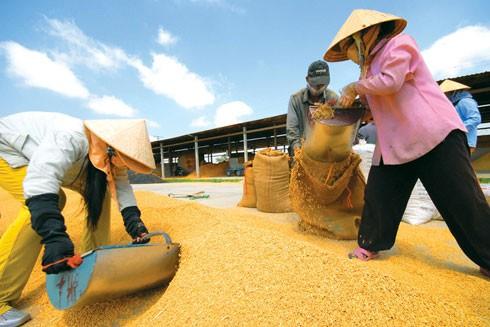 Người tiêu dùng các nước không thể nhớ tên loại gạo nào của Việt Nam